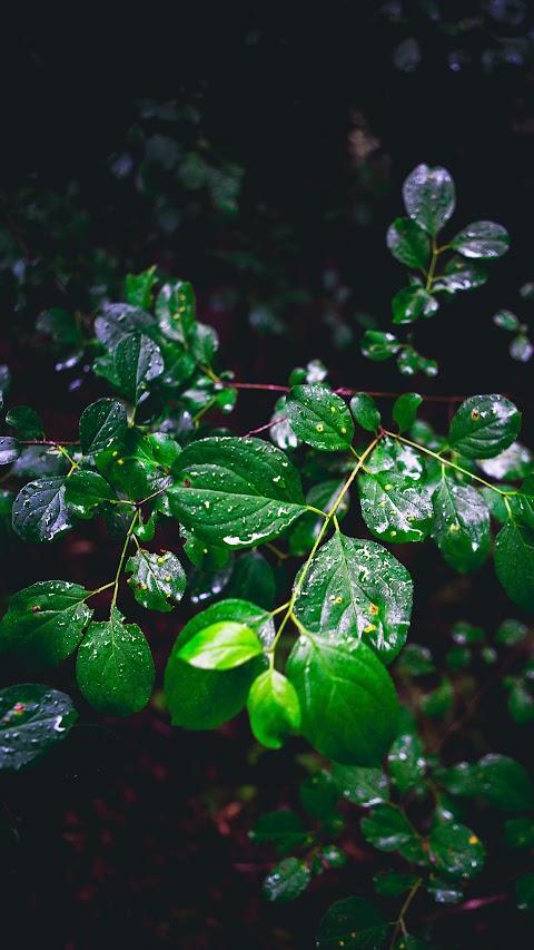 خلفية لقطرات الندى على اوراق النباتات بدقة عالية hd