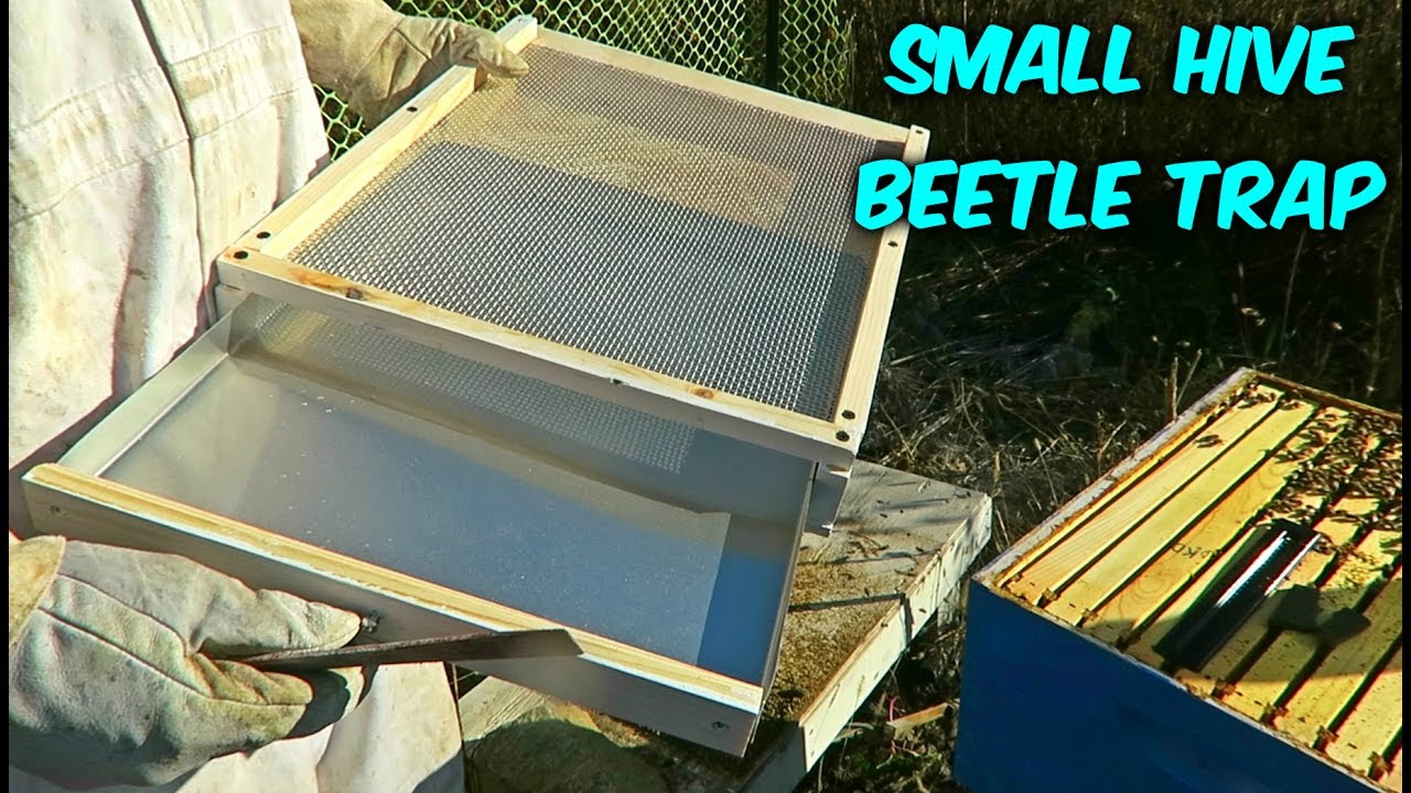 Small Hive Beetle Trap Put To The Test