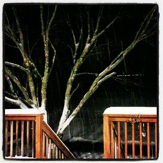 #snow falling again  #deck #backyard #tree #winter