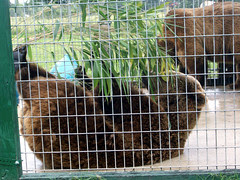 TigerWorld_52309_bearsQ
