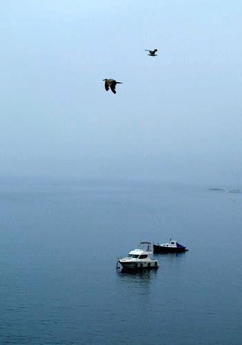 Dos barcos, dos pájaros by JoseAngelGarciaLanda