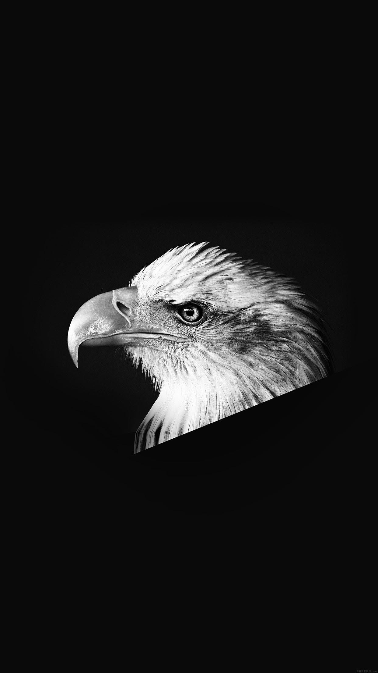 800 Wallpaper Black Eagle