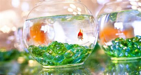Creative Centerpieces: One Fishbowl, Six Different Uses