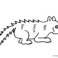 Dibujos Animales De La Selva Para Colorear 29 Dibujos De Animales