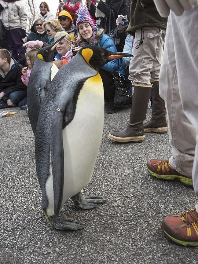 Penguin Parade 2