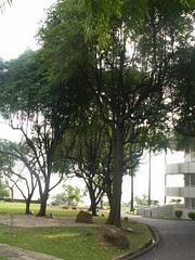 Jurong Hilltop (3)