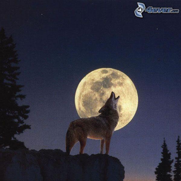 Lobo Aúllando