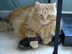 Jasper and Jeni's shoe