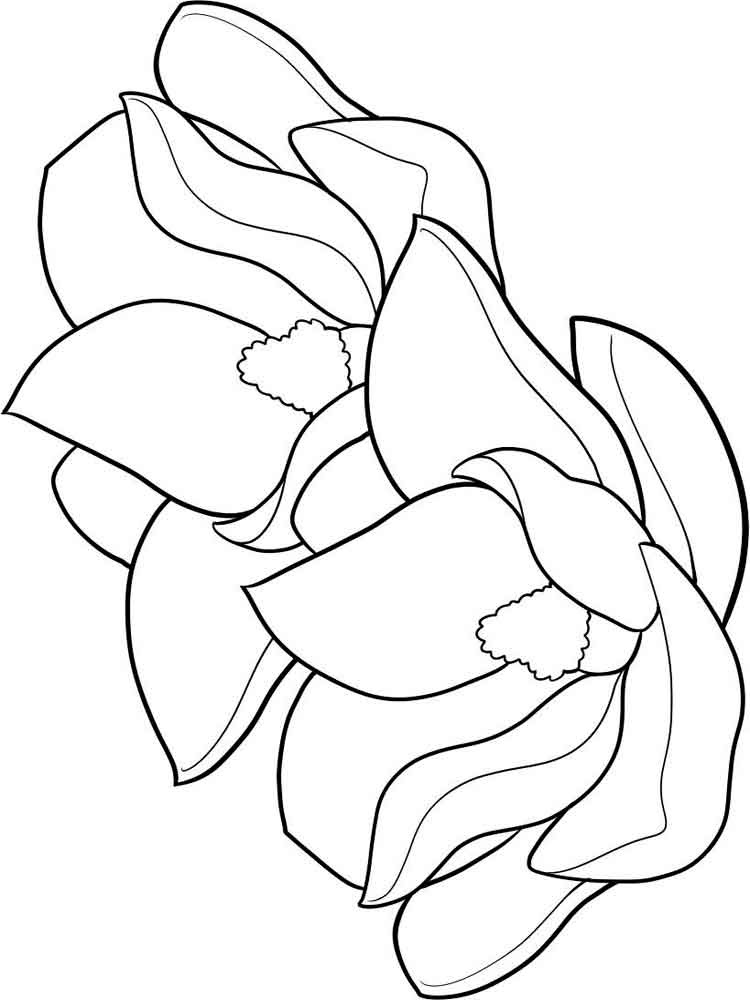 Magnolia flower coloring pages 3