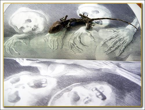 salamandra momificada