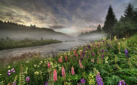 Norway, forest, river, trees, fog, flowers, summer