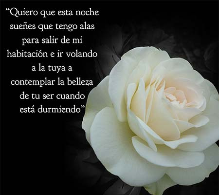 Buenas Noches Con Rosas Blancas Rosas De Amor