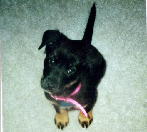 Baby Nellie