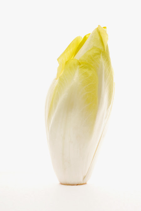 belgian endive or witlof© by Haalo