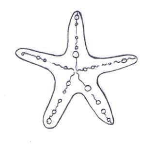Aprender A Dibujar Estrella De Mar Es Hellokids Com