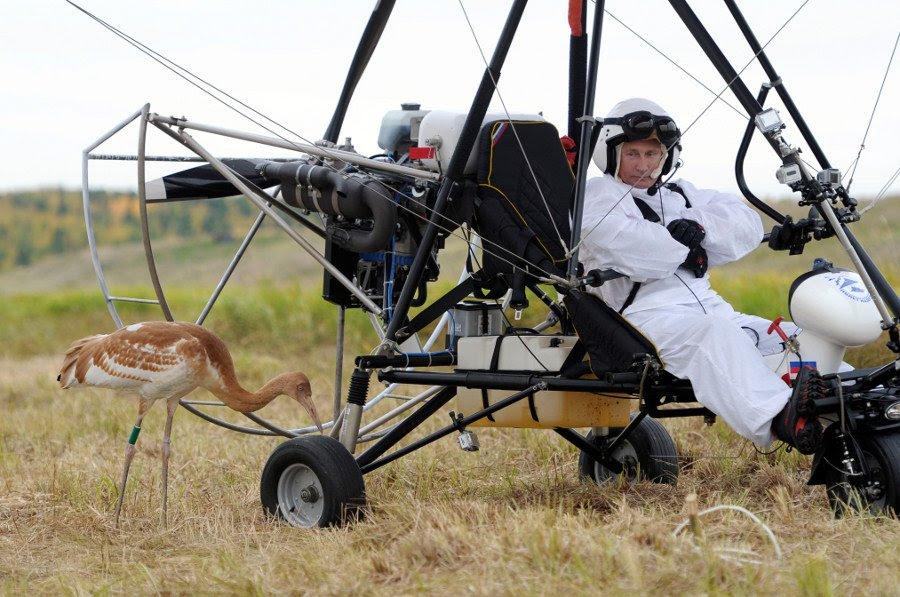 Putin sends Siberian cranes wintering, September 5, 2012.