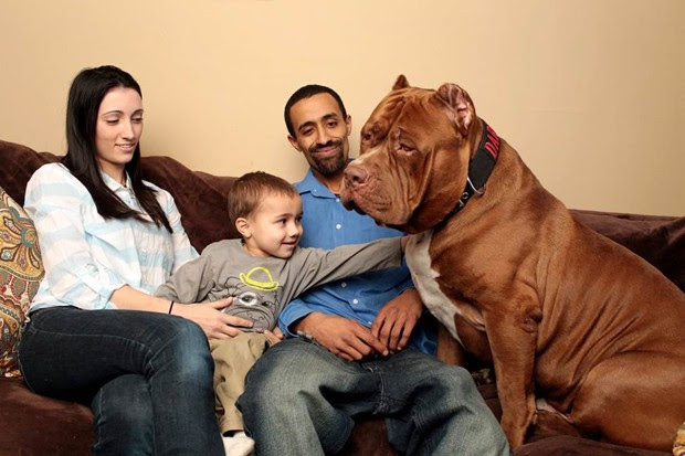 Gigante Hulk posa com donos Marlon e Lisa Grennan e o pequeno Jordan (Foto: Zuma Press/The Grosby Group)