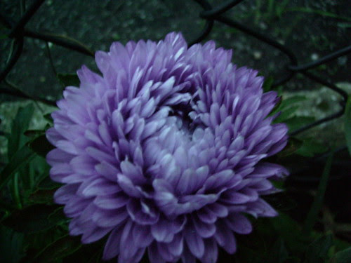 2006-08-16_aster_1