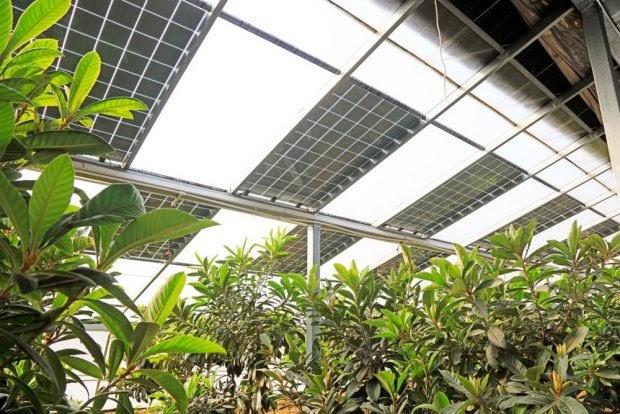 PANELES SOLARES + AGRICULTURA: UN FUTURO DE OPORTUNIDADES