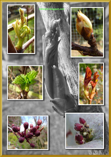 Buds March 2011