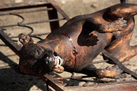 African Pet Meat Trade ? Africa Exposed.   Speak Up For The Voiceless   International Animal
