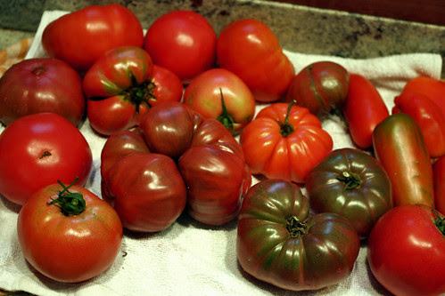 ripe tomatoes 144