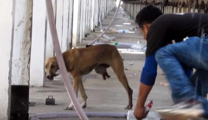 Una perrita gravemente herida por un tren a toda velocidad llora buscando ayuda