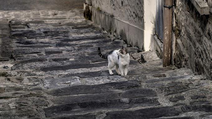 Consejos para educar a los gatos callejeros