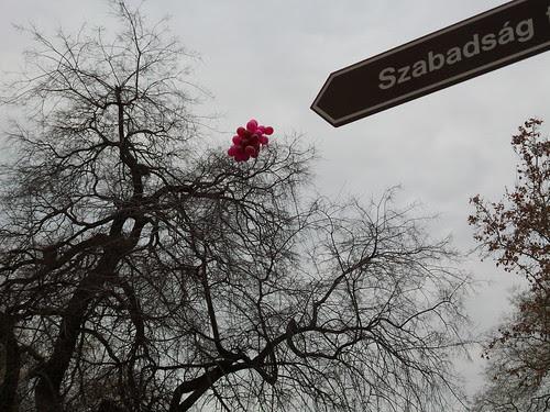 Szabadság, dove abitare a Budapest by Ylbert Durishti