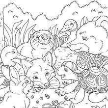 Dibujos Para Colorear Franklin Con Sus Amigos Eshellokidscom