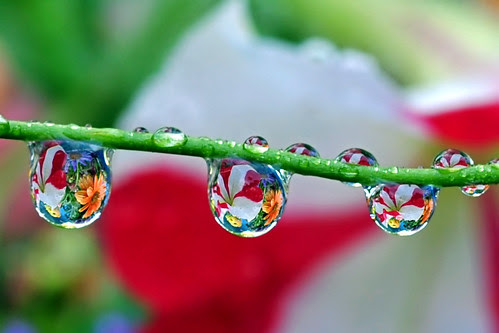 """Grand Opening: new """"water drop bouquet"""" grow, harvest and delivery service"""