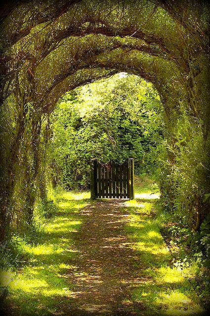 whitedreamer:  Gate by ilovebagpuss on Flickr.