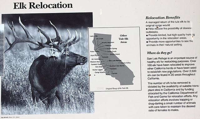 IMG_5847 Elk Relocation
