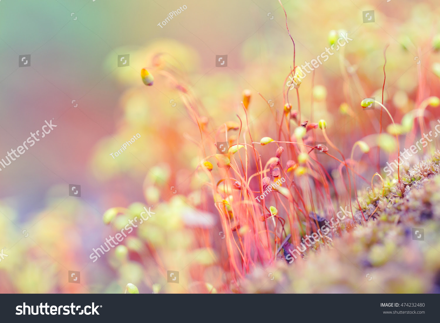 abstract, art, autumn, backdrop, background, beautiful, biology, blur, blurred, bokeh, botany, bright, capsule, close, closeup, color, colorful, defocused, design, detail, drop, fall, flora, flower, focus, forest, fresh, garden, grass, green, lichen, life, macro, moss, natural, nature, orange, outdoor, pink, plant, red, season, shallow, small, spore, spring, summer, wallpaper, wet, wild, yellow
