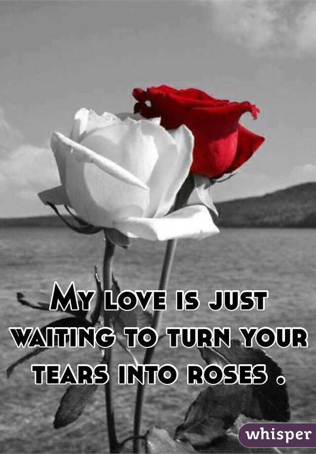 My Love Is Just Waiting To Turn Your Tears Into Roses