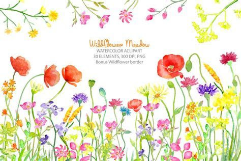 Watercolor clipart wildflower meadow, wild flower border