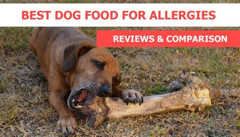 dog food  allergies reviews recommendations