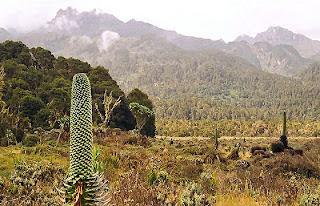 Księżycowe Góry w Afryce, Ruwenzori