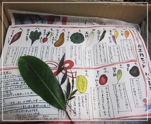 「ビオファームまつき」のお正月野菜セット、箱を開けると色鮮やかなリーフレットがお出迎え。