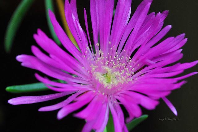 Flores del día II