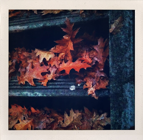 Leafy Steps