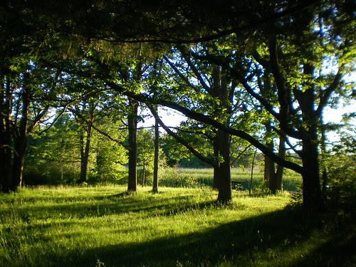 Under the oak trees