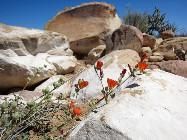 spring has sprung in the desert