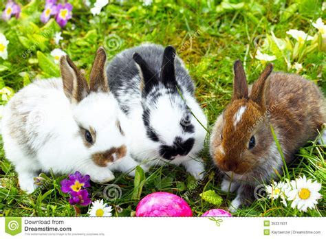 Easter Bunny Hide Eggs Stock Image   Image: 35337931