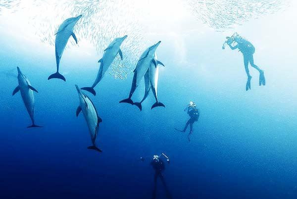 perierga.gr - Μαγευτικές εικόνες στο βυθό της θάλασσας!