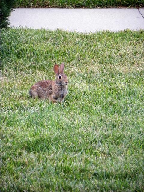 DSCN6283 Bunny
