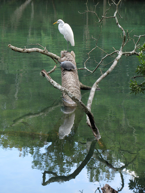 wildlife at Homosassa, Florida