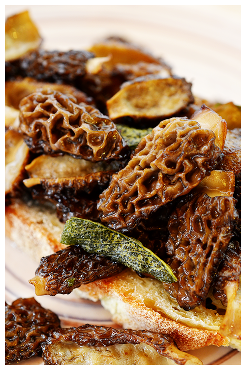 Morel and Sage Bruschetta© by Haalo