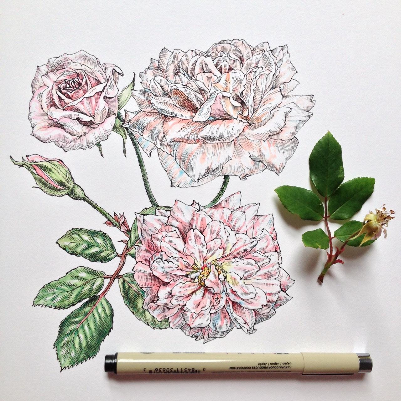 Dibujos De Flores A Color Tumblr Imagesacolorier Website
