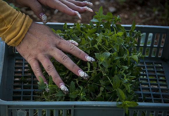 agroecologia-fernando-funes-cuba15